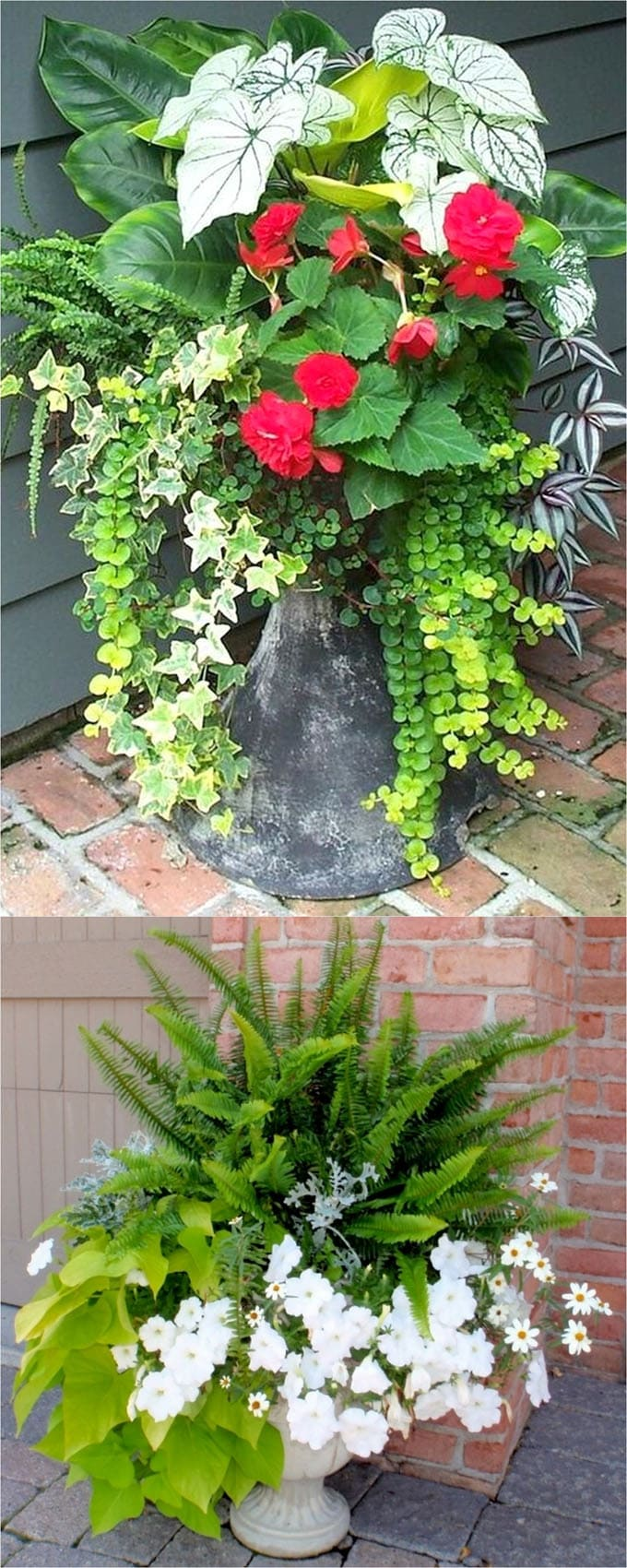 foliage shade plants in patio planter