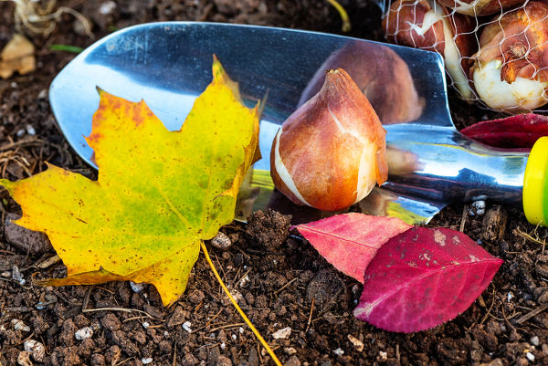 bulb autumn planting tips