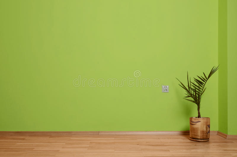 Interior room with wooden floor, plant and wall in green with an electrical contact in the wall and wooden skirting. Interior room with wooden floor and wall in stock photography