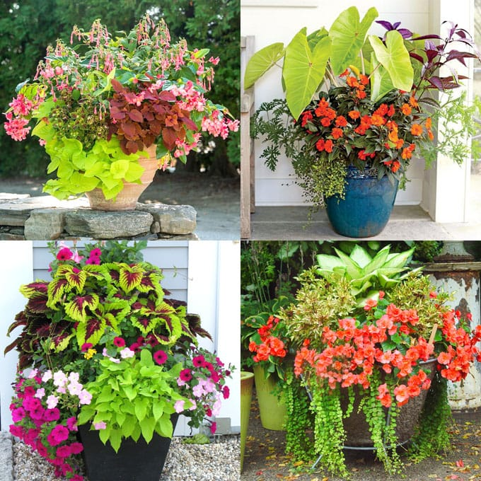 colorful and easy care shade loving plants in pots