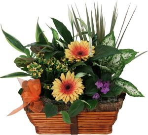 Indoor Plants · Gift of Plants · Planters